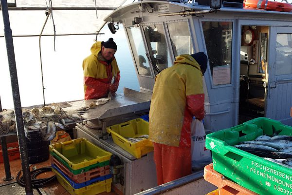 Fischer bei der Arbeit im Hafen von Breege auf der Insel Rügen