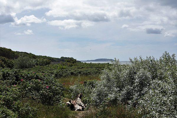 Blick nach Hiddensee von Bug auf der Halbinsel Wittow im Norden von Rügen