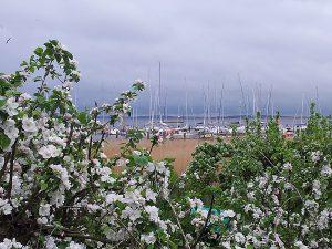 Hafen von Breege auf der Insel Rügen
