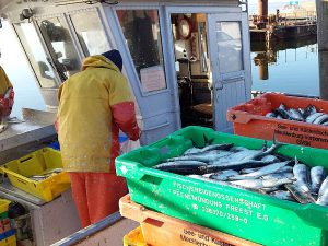 Fischer sortieren ihren Fang im Hafen von Breege auf Rügen