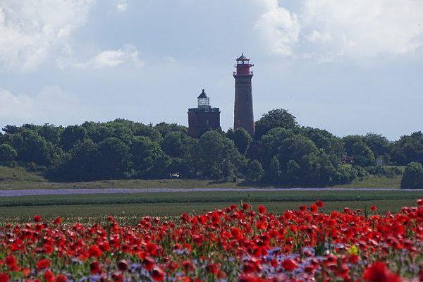 Mohnwiese am Kap Arkona auf der Insel Rügen an der Ostsee