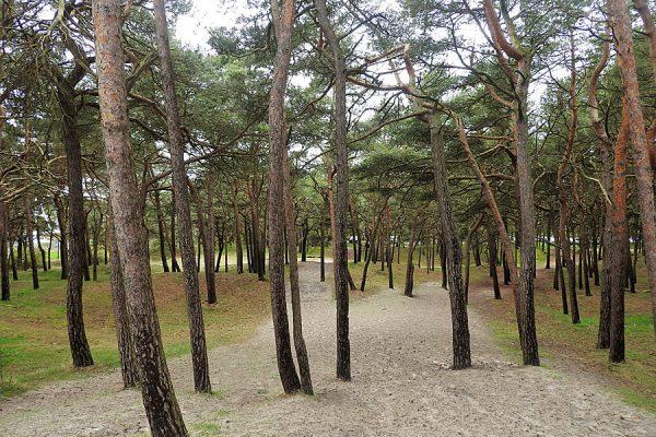 Weg zum Strand im Ostseebad Breege-Juliusruh auf der Halbinsel Wittow im Norden von Rügen