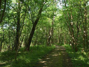 Waldweg auf der Halbinsel Wittow im Norden von Rügen