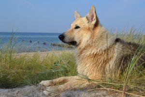 Urlaub am Strand von Juliusruh